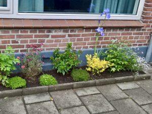 Foto van geveltuin met verschillende soorten planten