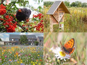 Vier afbeeldingen: vogel, vlinder op een bloem en insectenhotel